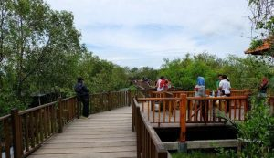 mangrovesurabaya2
